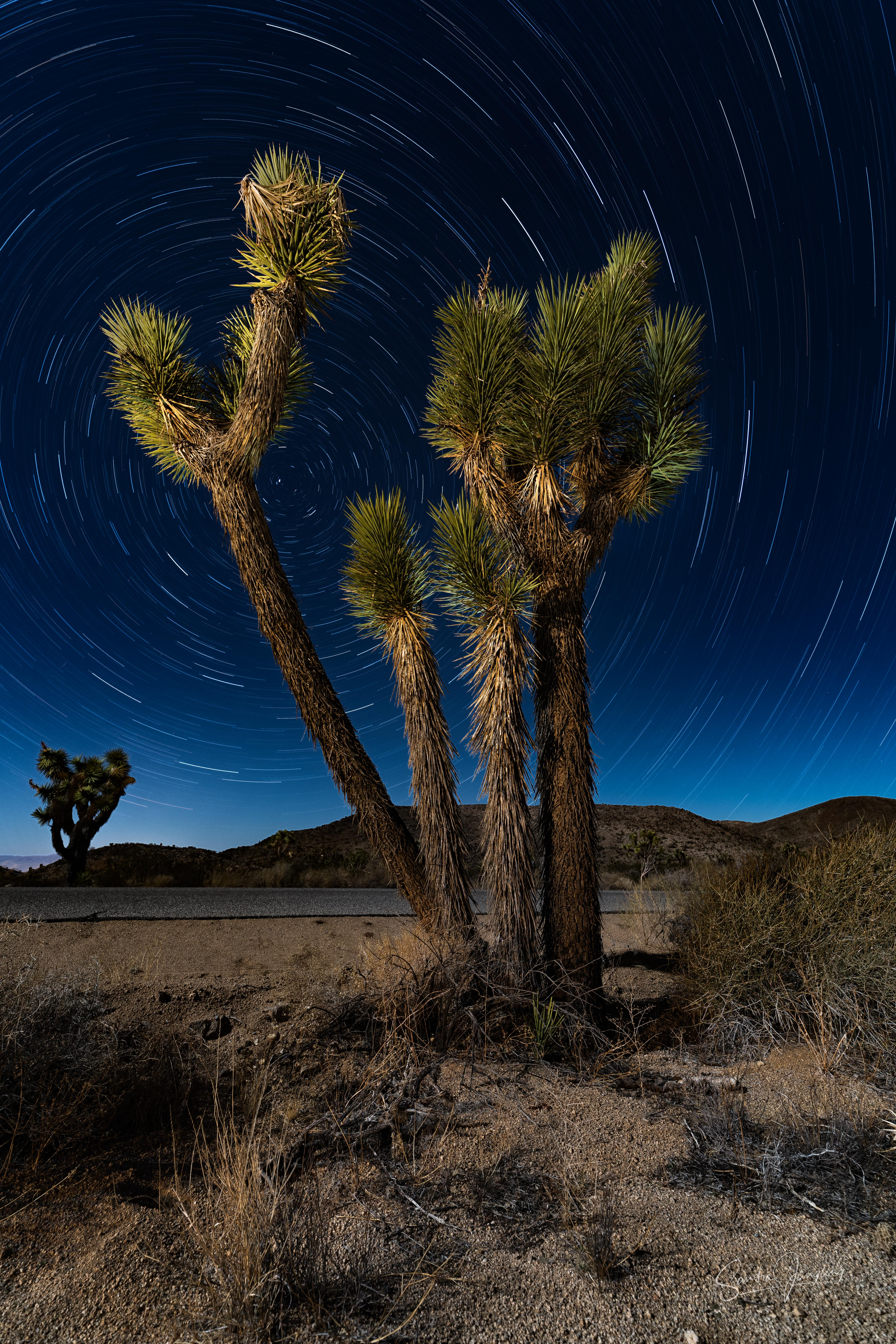 Joshua trees and stars #1