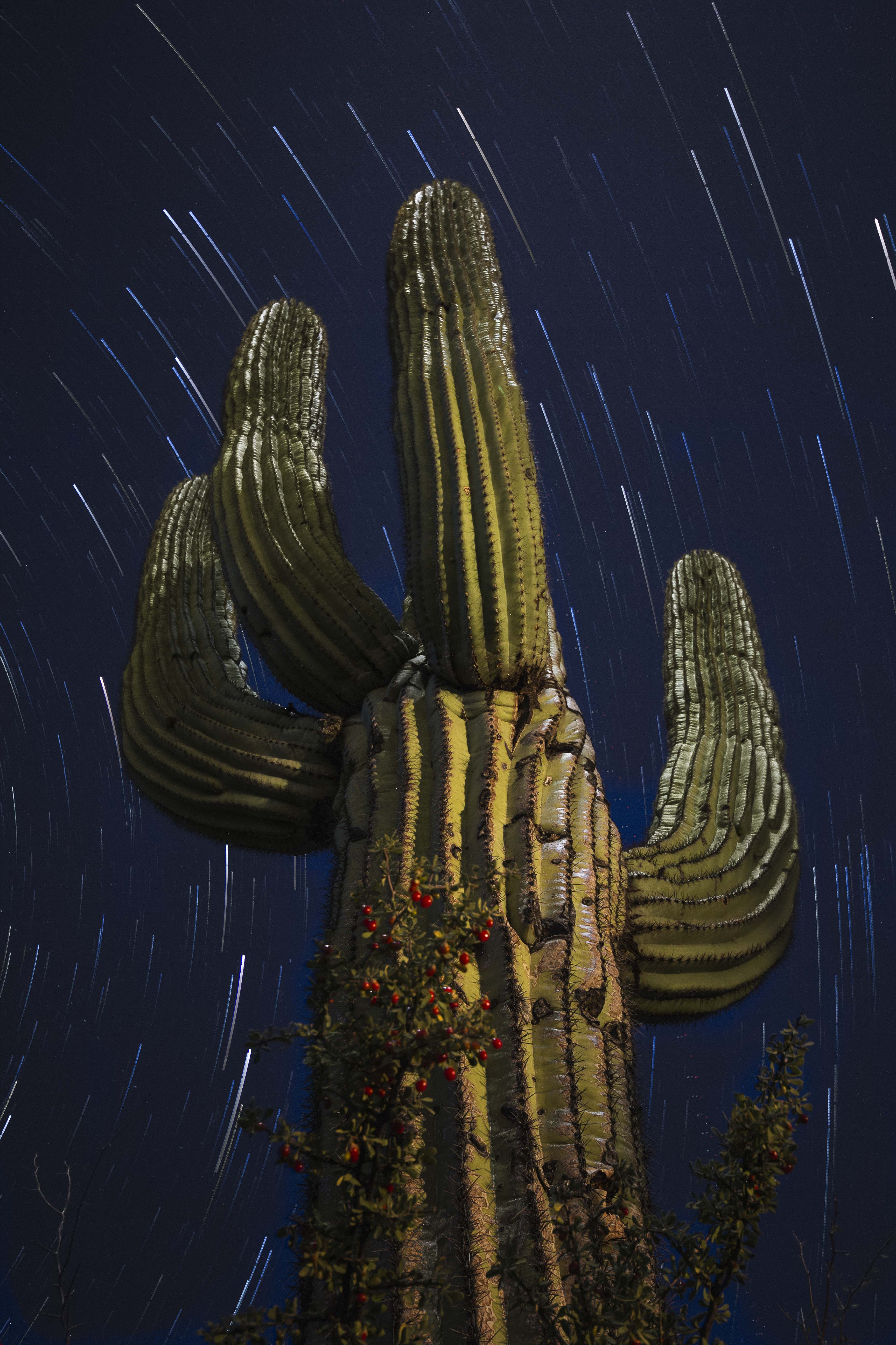 Cactus and stars.