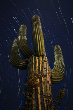 Cactus and stars.