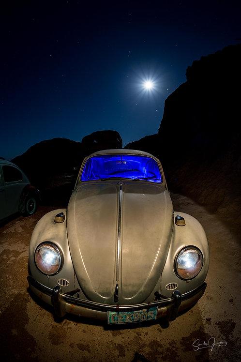 Moonlit bug