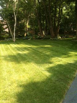 Nice back yard.