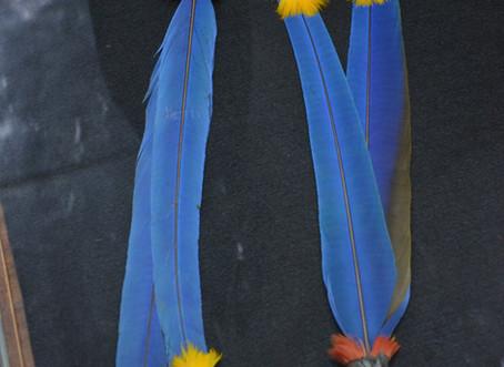 Narigueiras emplumadas (Rikbaktsa)