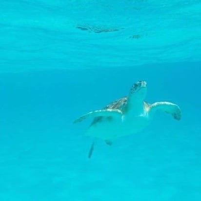 Friday Snorkel Trip