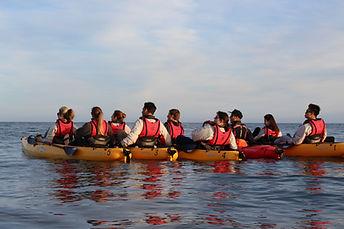 group kayaking in kaikoura, seal kayak kaikoura