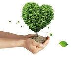 sustentabilidad 4.jpg