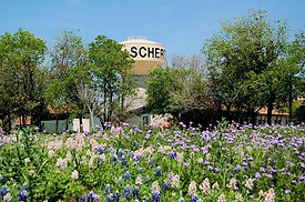 Schertz spring field with flowers and water tower