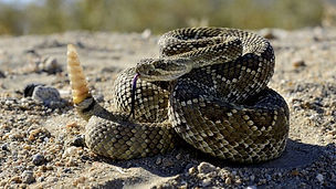 Rattle Snake locksmith