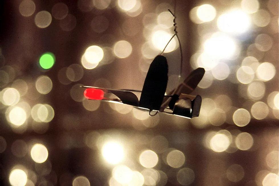 Firefly-03.jpg