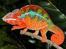 Chameleon Animal Pictures.jpg