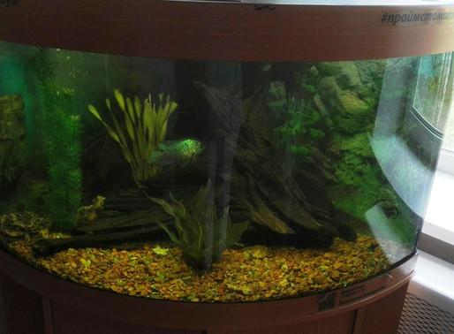 В преддверии дня медицинского работника в диспансерном отделении для детей установлен аквариум