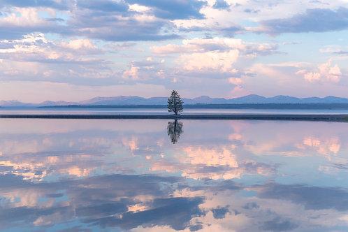 Lone Tree - Yellowstone Lake