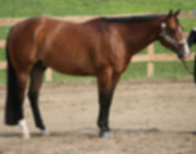 quarter_horse.jpg