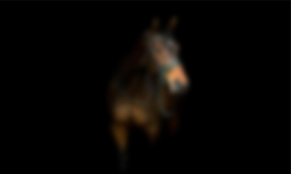 blur horse 2.jpg