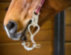 264410-HORSE.jpg