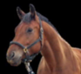 horse head.png