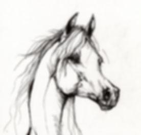 arabian head line.jpg