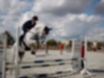 Showjumping_white_horse.jpg