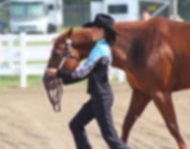 4h horse stock image.jpg