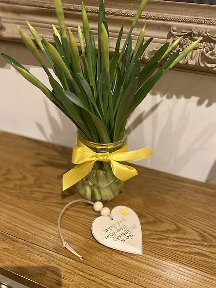 Daffodil gift