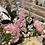 Thumbnail: Pastel basket of roses