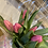 Thumbnail: Churn of Tulips with plaque