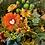 Thumbnail: Autumn suprise