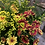 Thumbnail: Funeral pot arrangement