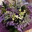 Thumbnail: Beautiful boxed Bouquet