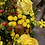 Thumbnail: Autumn Arrangement