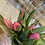 Thumbnail: Tulips in a small milk chun