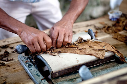 Traditional Cigar Rolling