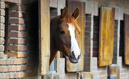 Benefits of using our Wood Pellets for Horse Bedding