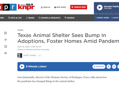 NPR: Texas Animal Shelter Sees Bump In Adoptions, Foster Homes Amid Pandemic