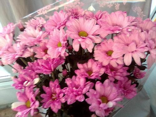 Розовая кустовая хризантема