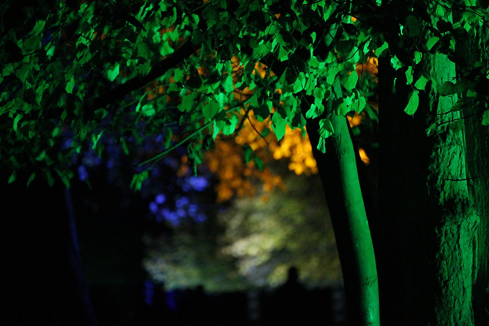 Trees illuminated by different coloured lights in the evening.