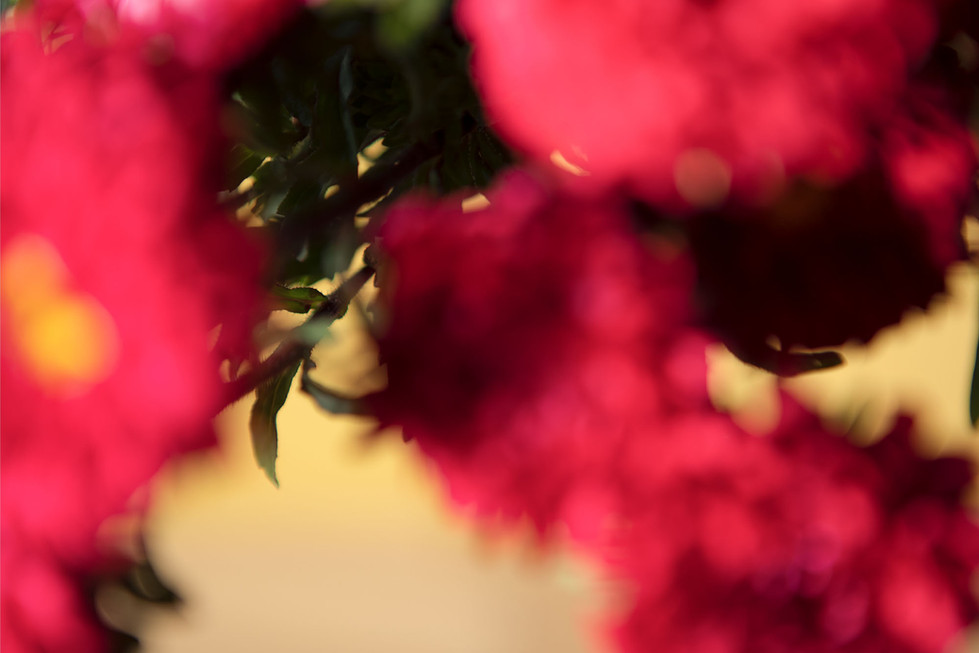 pierre et florent - ROOS_LA_FAVORITE_04.