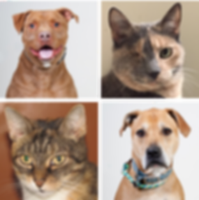 Sponsor a Cat or Dog at Hudson Valley SPCA