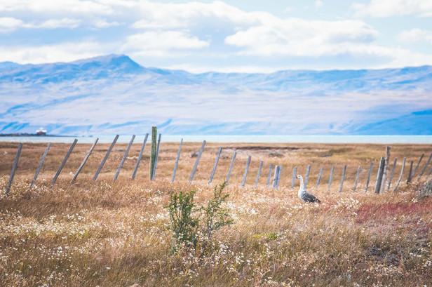 photo-paysage-argentine
