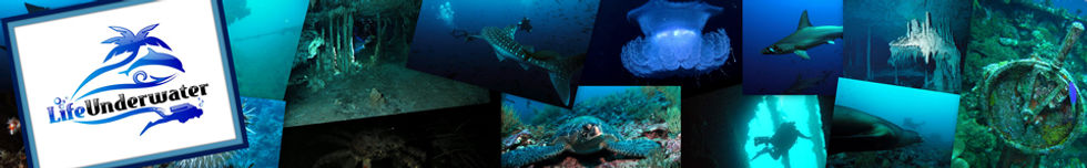 Collage of scuba pictures - scuba diving tampa