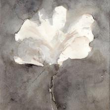 fleur0064.jpg