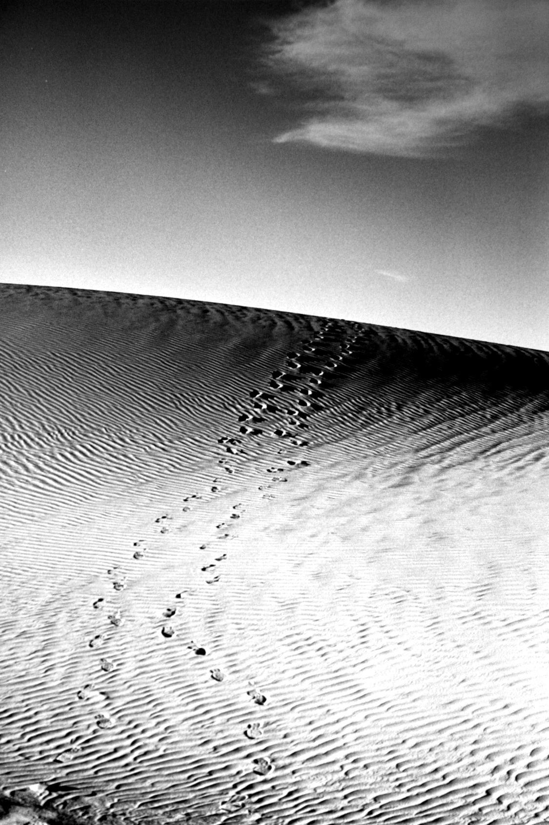 traces adrar