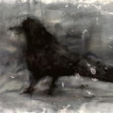 43-Corbeau.jpg