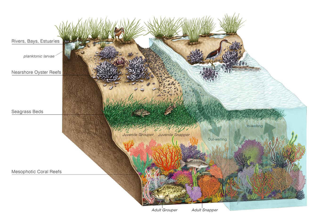 Gulf Coast Habitats Connectivity