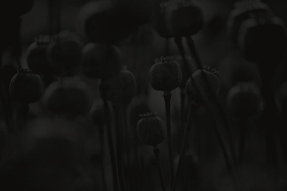 7175135-_edited_edited.jpg
