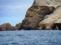 islas-ballestas-3664086_1920.jpg