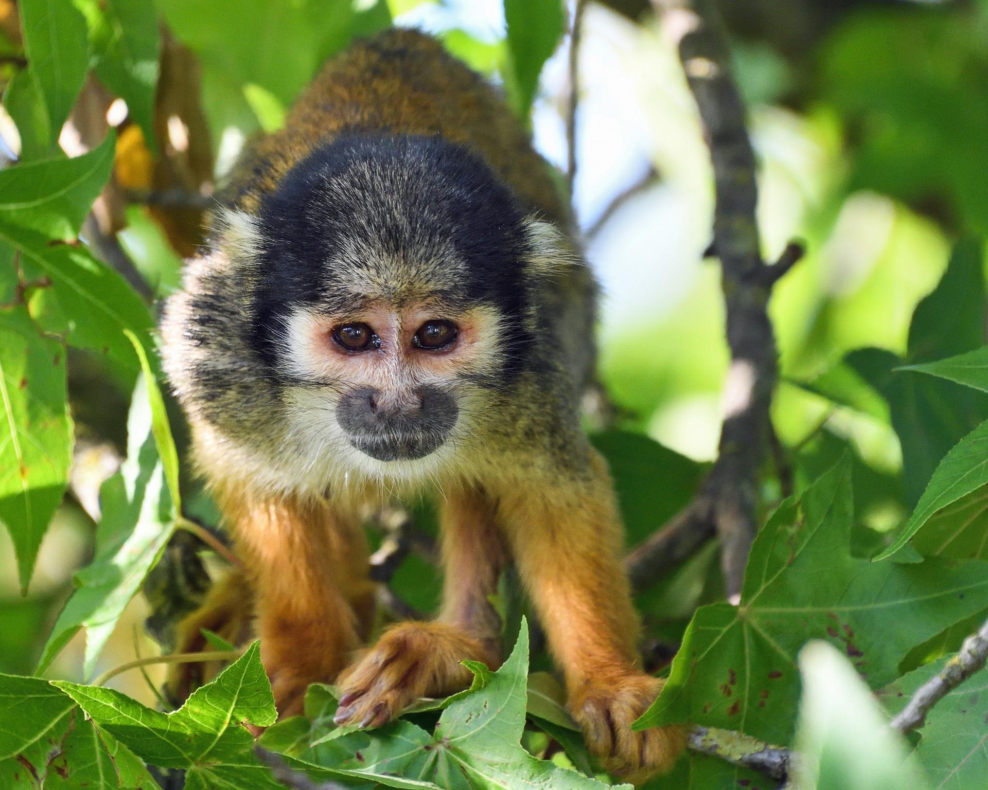 monkey-2661688_1920.jpg