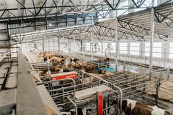 Caine Dairy - USU