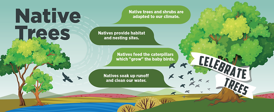 Why Native trees Webgraphic_980px_3.png