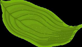 Dogwood leaf.png