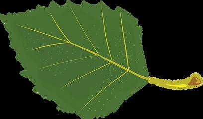 Birch leaf.png